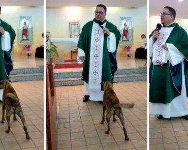 Cão Entra Na Igreja e Pede Atenção Puxando a Batina Do Padre Durante o Sermão 6