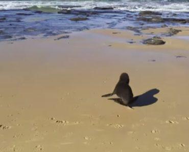 Foca Bebé Corre De Alegria Depois De Surfistas a Libertarem De Rede De Pesca 6