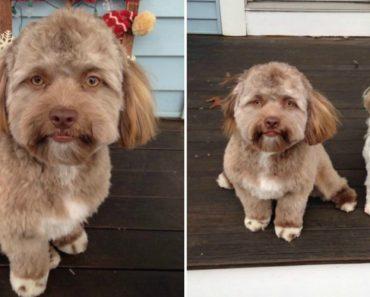 Cão Com Feições Humanas Tem Deixado Muitos Internautas Intrigados 5