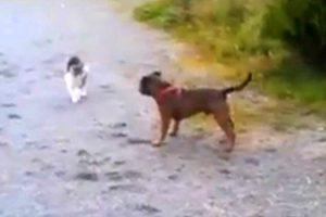 Cãozinho Só Queria Fazer Amizade, Mas o Gato Tinha Outras Ideias 8
