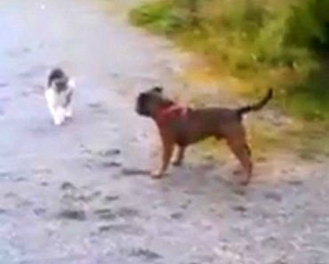 Cãozinho Só Queria Fazer Amizade, Mas o Gato Tinha Outras Ideias 7