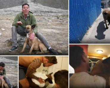 """Steve-O (ex-Jackass) Numa Visita Ao Peru Encontrou o """"Verdadeiro Amor"""" Numa Cadela De Rua! 5"""
