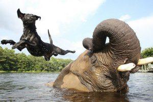 Elefante e Cadela Tornam-se Amigos Inseparáveis 10