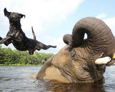 Elefante e Cadela Tornam-se Amigos Inseparáveis 5