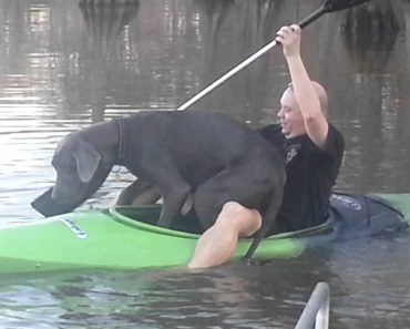 Enorme Cão Decide Fazer Passeio Com O Dono Num Pequeno Caiaque 2