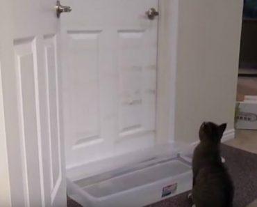 """Ágil Gato Não Se Deixa Apanhar Pela """"Armadilha"""" Que o Dono Montou Para o Impedir De Abrir As Portas 1"""