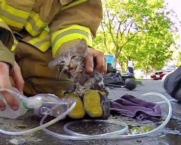 Bombeiro Salva Gatinho Inanimado De Casa Em Chamas e Devolve-o à Vida 3