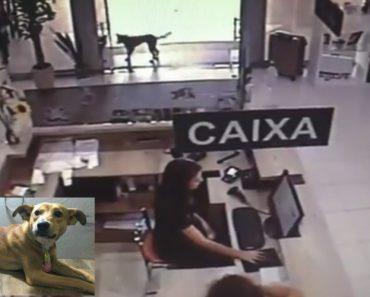 """Cão De Rua Rouba Livro """"Dias De Abandono"""" e Ganha Uma Vida Nova 1"""