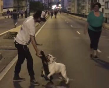 Bulldog Fanático Por Andar De Skate Recusa-se a Devolvê-lo Ao Dono 3