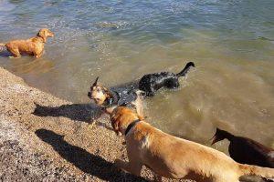 Parque Público Para Cães Cria Lagoa Para Que Eles Possam Nadar e Brincar 10