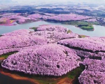 Primavera Na China: Provavelmente As Imagens Mais Bonitas Que Irá Ver Hoje 5
