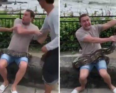 Homem Com Pavor De Cobras Esforça-se Por Posar Para Fotografia Enquanto Segura Piton 5