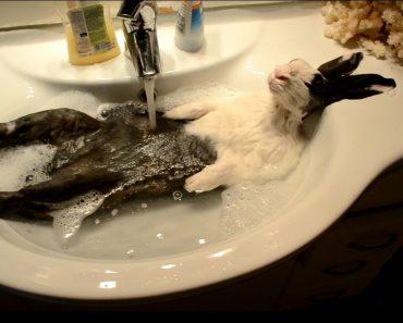 Coelho Adora Um Bom Banho De Relaxamento 4