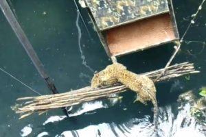 Incrível Salvamento De Um Leopardo Depois De Ter Caído Num Poço De 18 Metros 10
