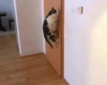 Habilidoso Gato Abre 5 Portas Para Sair De Casa 5