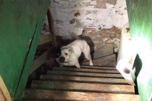 Comprou Casa, e Descobriu Pitbull Acorrentado Na Cave. A Reacção Do Animal é Emocionante 10