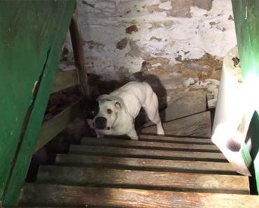 Comprou Casa, e Descobriu Pitbull Acorrentado Na Cave. A Reacção Do Animal é Emocionante 3