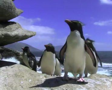 Pinguins... Haverá Animal Mais Trapalhão Que Este? 8