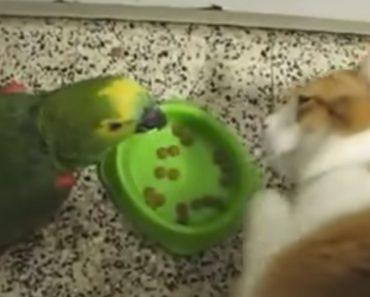 Gato Mostra a Papagaio Que a Paciência Tem Limites 1