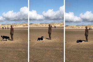 Cão Com Vontade De Brincar Não Entende Porque Estátua Não Atira a Bola 10