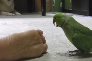 Os Pés Do Dono São Tão Mal Cheirosos Que Nem O Papagaio Suporta 38
