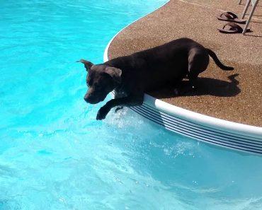 Confuso Cão Nada Em Piscina Pela Primeira Vez 7