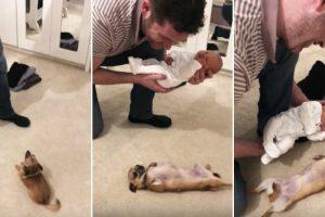 A Forma Como Um Chihuahua Deu As Boas-Vindas Ao Novo Membro Da Família Derrete Corações 10