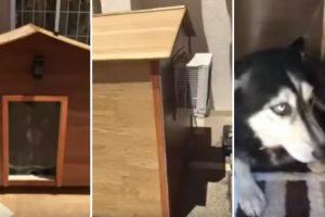 Cão Recusa-se a Sair De Dentro Da Casota Por Ter Ar Condicionado 10