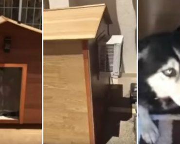 Cão Recusa-se a Sair De Dentro Da Casota Por Ter Ar Condicionado 6