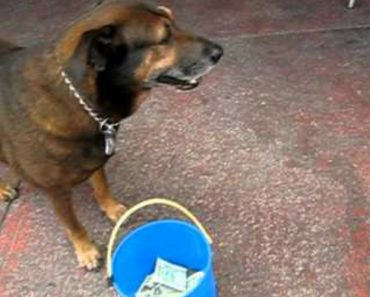 Inteligente Cão Sabe Exatamente o Que Fazer Para Pedir Dinheiro Aos Turistas 9