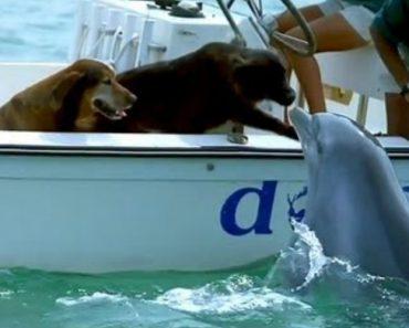 Cão Passeava De Barco Quando Foi Surpreendido Com Beijo De Golfinho 4