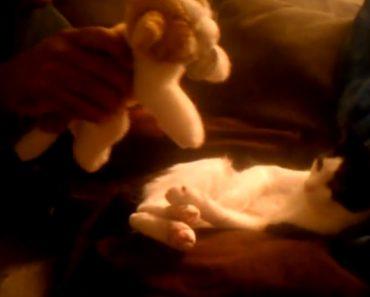 Adorável Gatinho Não Dispensa o Seu Ursinho De Peluche 9