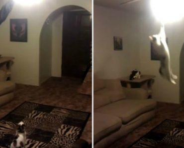 Gato Faz Salto De 2 Metros Para Apagar Luz 7