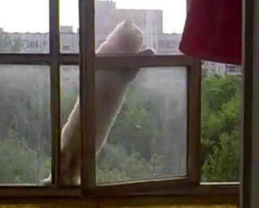 Gato Sobe 6 Andares Para Entrar Em Casa 5