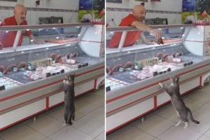 Generoso Talhante Oferece Carne a Gato De Rua Que Entrou No Seu Talho 10