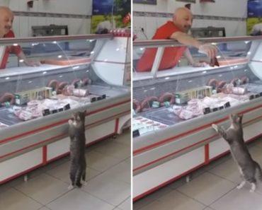 Generoso Talhante Oferece Carne a Gato De Rua Que Entrou No Seu Talho 5