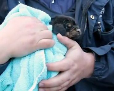 Salvamento De Um Cachorrinho Com 4 Semanas Preso Num Cano De Águas Subterrâneo 4
