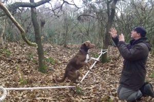"""Cão Acrobata Equilibra-se Em Cima De Uma """"Corda Bamba"""" 7"""