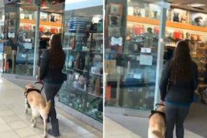 Sempre Que Vão Ao Shopping Guloso Cão-Guia Leva a Dona à Loja De Animais 10