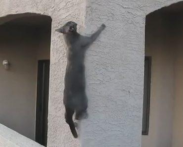 Gatos Mostram Que Não Existem Edifícios Impossíveis De Escalar 4