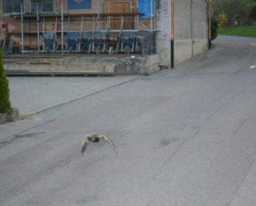 Pato Apanhado Por Radar… Por Voar Em Excesso De Velocidade 1