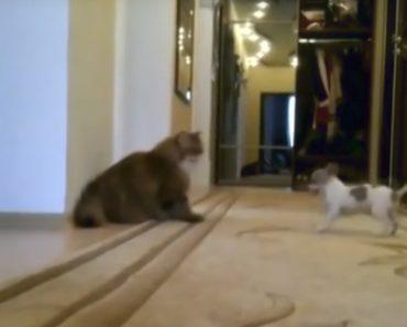 Pachorrento Gato Conhece o Cão Mais Chato Do Mundo 4