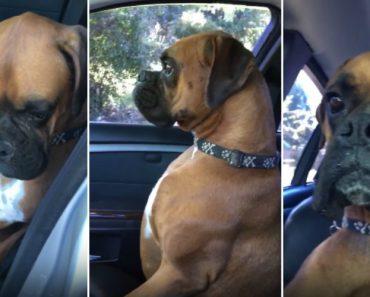 Cão Mostra Todo o Seu Descontentamento Com a Dona Por Esta o Ter Deixado No Carro 21