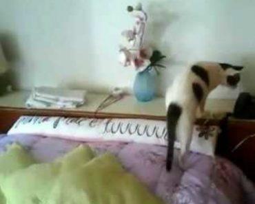 Inteligente Gato Adora Atender Chamadas Telefónicas 8