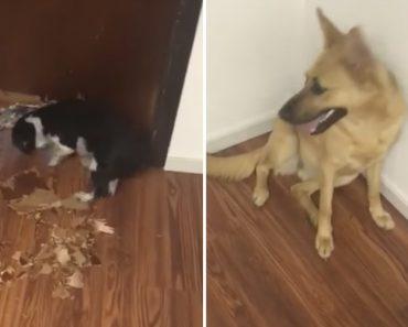 Dono Chega a Casa e Descobre o Enorme Buraco Na Porta Que os Seus 2 Cães Fizeram 3