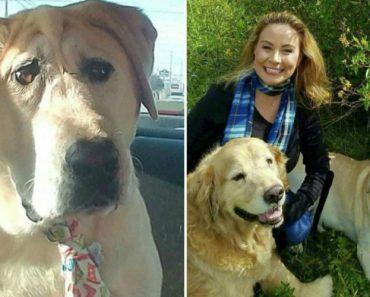 Cão Abandonado Por Ter Deformação Facial Ganha Nova Oportunidade Para Ser Feliz Num Novo Lar 2