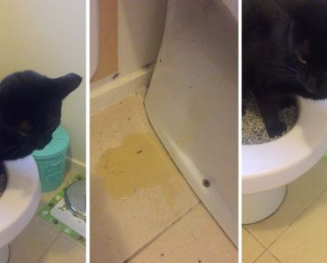 Tentou Treinar o Gato a Usar o Sanitário, Mas a Experiência Não Correu Como Esperava 2