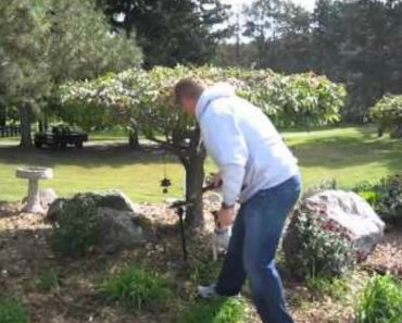Cão Sobe Árvore Para Buscar o Pau Que o Dono Atirou 4