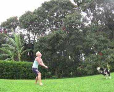 Cadela Mostra a Sua Habilidade Para o Voleibol 9