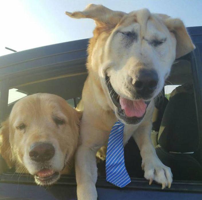 Cão Abandonado Por Ter Deformação Facial Ganha Nova Oportunidade Para Ser Feliz Num Novo Lar 12
